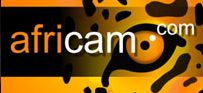 Nkorho Pan Safari Cam (Africa)