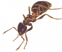 Ant Cam