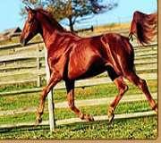 Horse TV (Россия)