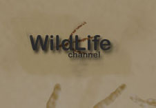 Wild Life Channel (UK)