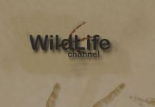 Wild Life Channel (UK)